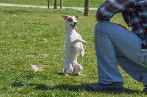 Come-educare-i-cuccioli-di-cane