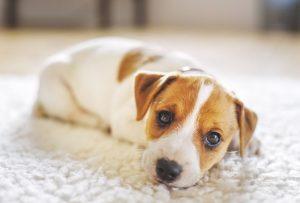 tappetini lavabili per cani